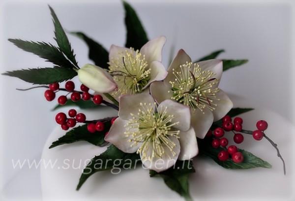 Rosa di Natale © The sugar garden
