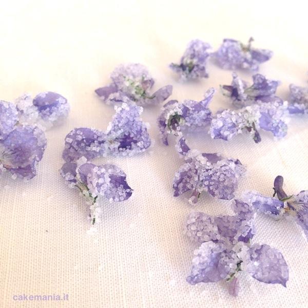 violette candite violette cristallizzate