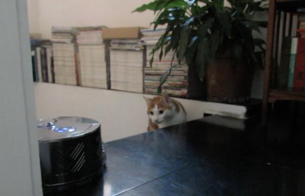 dyson-360-eye-cat