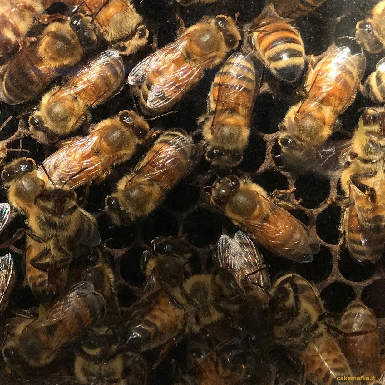 api bionde