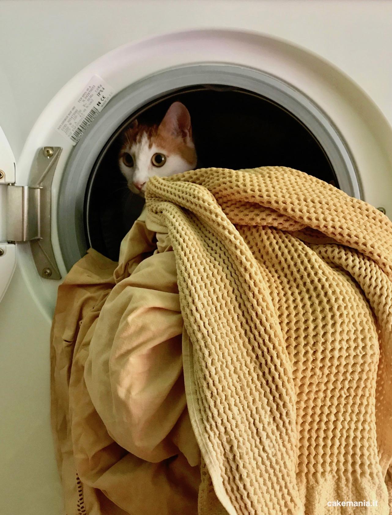 gatto lavatrice