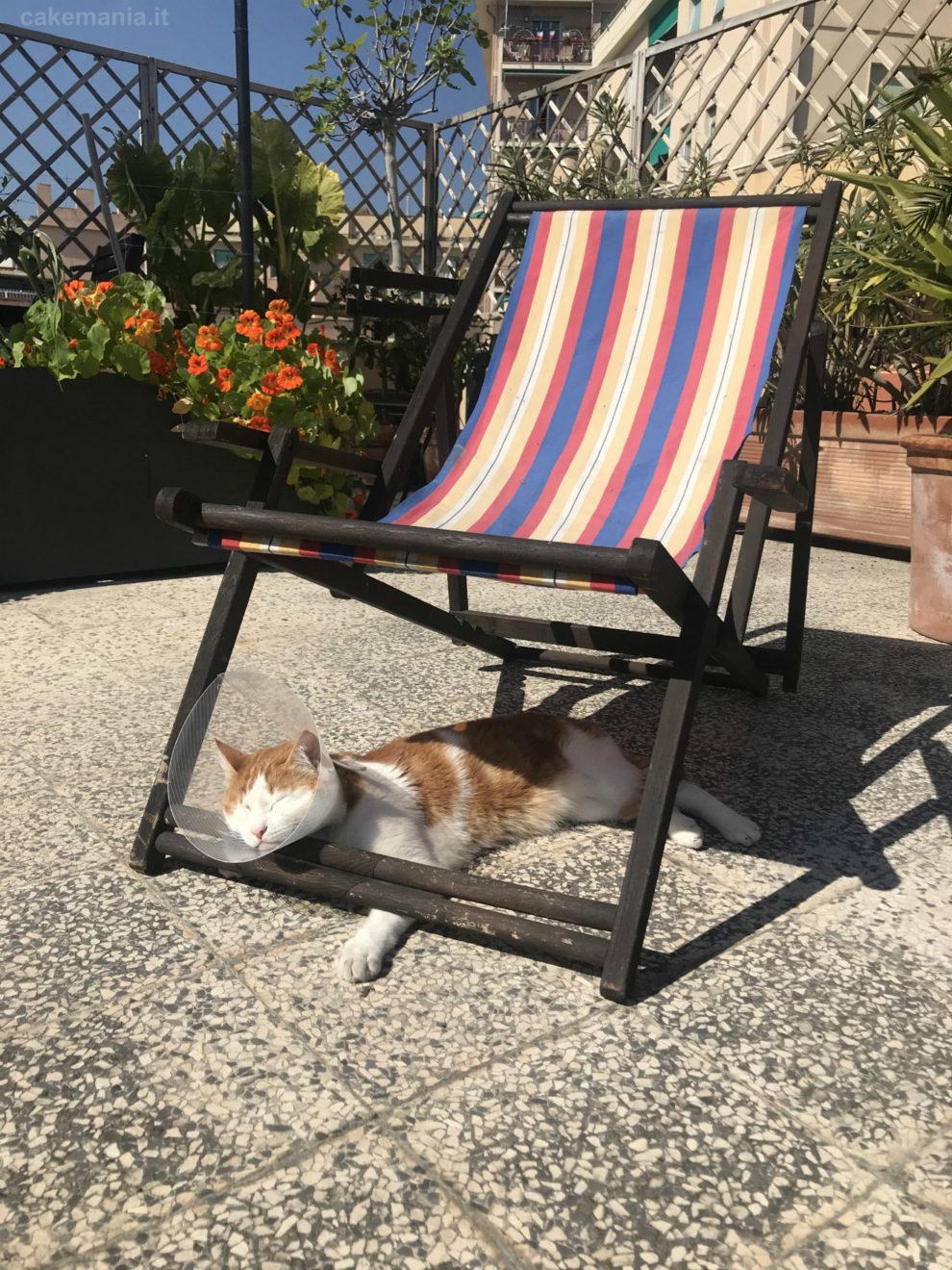 gatto sul terrazzo