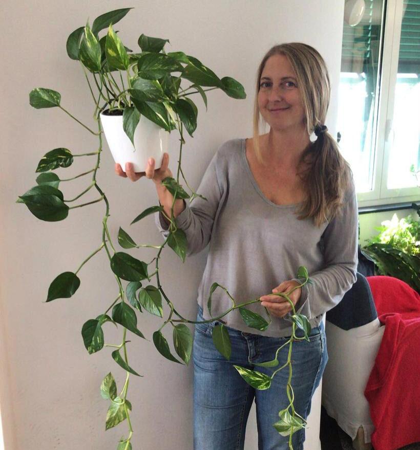 come fare le talee delle piante da appartamento-11